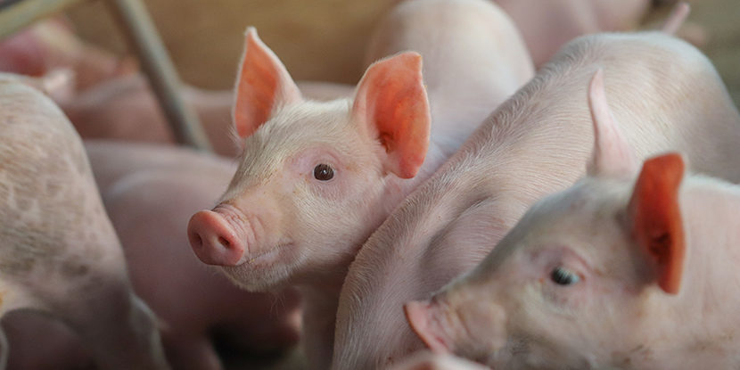 Ceva, Bayer, European jurisdictions, piglets